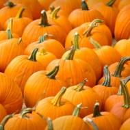 Social Skills Tricks For Halloween